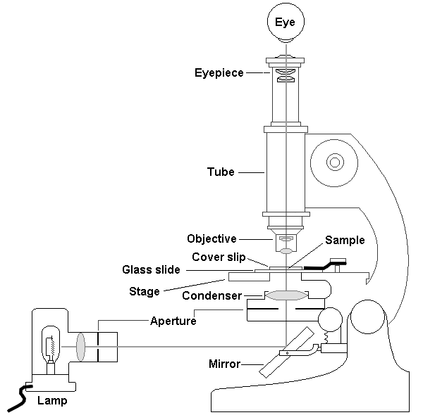 simple microscope diagram basic electrical wiring for house lecture 1 intro to em biologists electron unit of a light