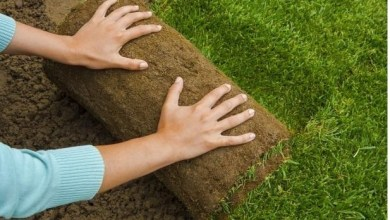 Photo of Just How to Care For New Sod Lawns