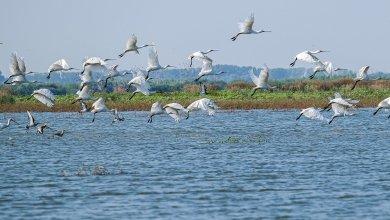 Photo of Explore the Wild Danube Delta