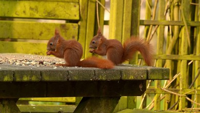 Photo of How Pest Control Bristol Can Get Your Garden Squirrel Free
