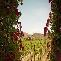 Photo of THE TOP 15 WINERIES IN SEDONA, AZ, AND THE VERDE VALLEY WINE REGION