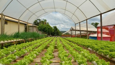 Agriculture greenhouses