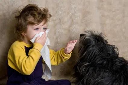 Amo a los perros pero, soy alérgica!