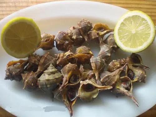 Cómo preparar los caracoles de mar o