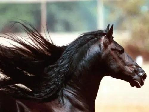 El champú de caballo: ¿Son todo beneficios?