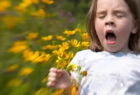 Siete alimentos e hierbas para calmar las alergias
