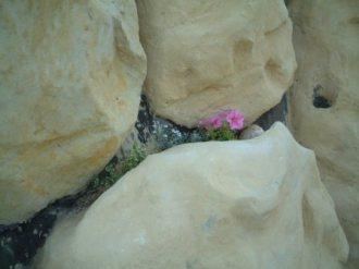 擬岩に花を植える