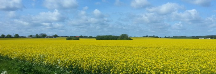 Campagne danoise, proche de Køge