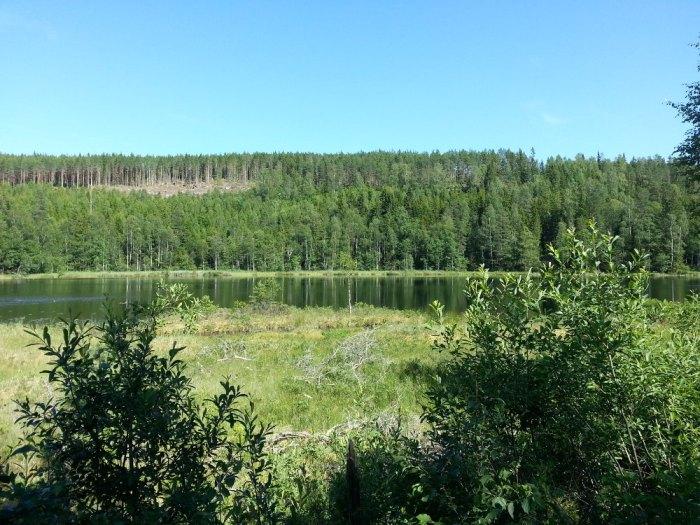 Forêt de sapins Norvège