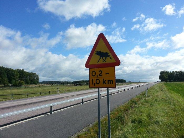 Traversée de rennes Suède