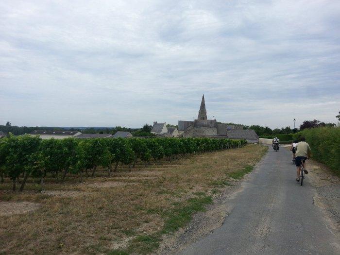 Vignoble Souzay-Champigny