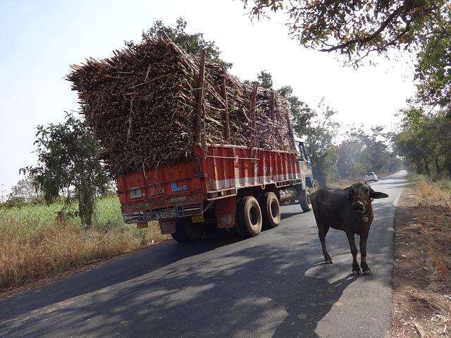 Partage de la route en Inde