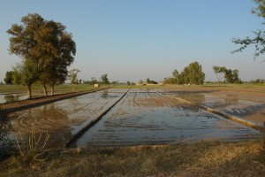 Irrigation Pakistan Punjab