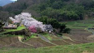Paysage de campagne au Japon