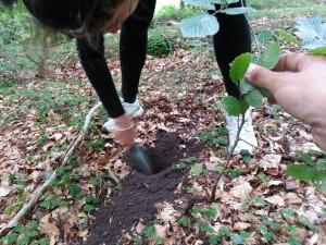 replantage arbre