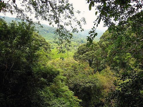 La jungle de Bornéo