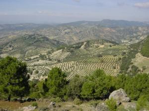 Montagnes andalouses