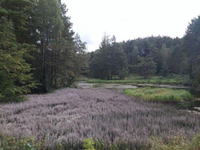 forêt lituanienne