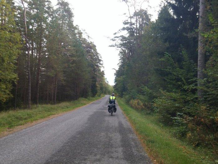 forêt estonienne