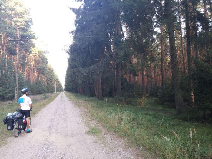 Sentier de cailloux en forêt en Pologne