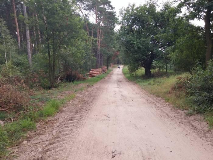 Sentier sablonneux en forêt en Pologne