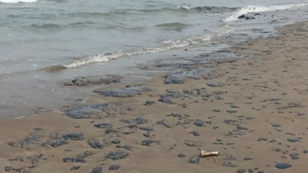 Reportan chapopote en playas de Veracruz