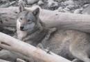 Morena propone eliminar todos los zoológicos de CDMX