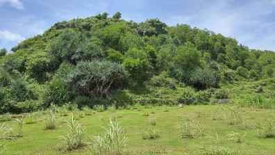Kosakara Hill