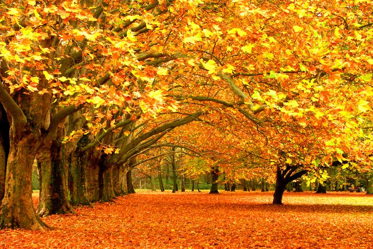 Resultado de imagen de el otoño