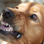 agresividad del perro con otros perros
