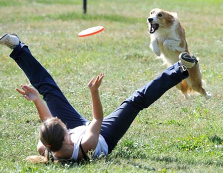 Juegos con tu perro