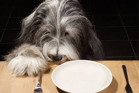 qué come tu perro