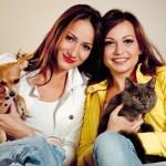 perros, gatos y personas
