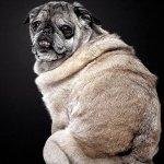 eutanasia en perros