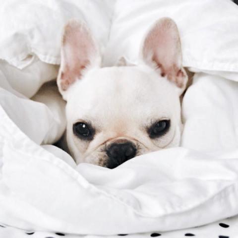 exceso de lágrimas en perros