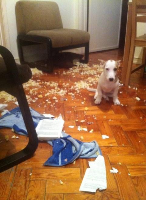 perro con ansiedad