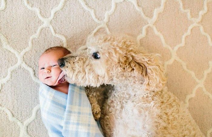 perro ante la llegada de un bebé