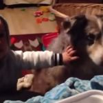el perro que dice mamá