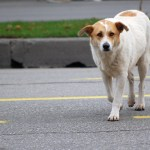 asfalto, un peligro para las almohadillas de tu perro