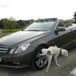 por qué los perros orinan en las ruedas del coche