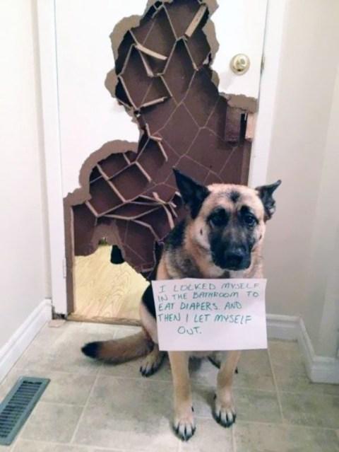 travesuras de perros