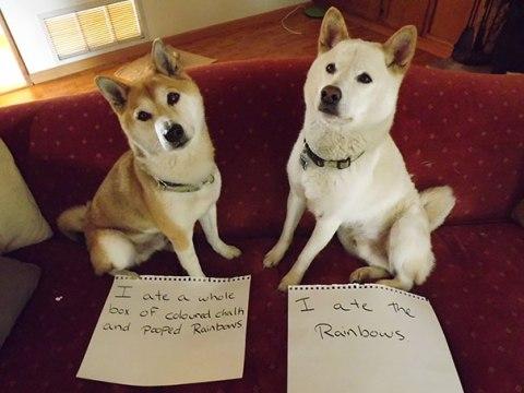 gamberradas de perros