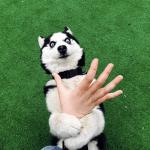 perros se revuelcan en la hierba