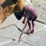 perra rescata a bebé