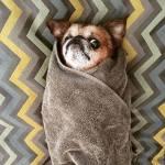 cáncer en perros