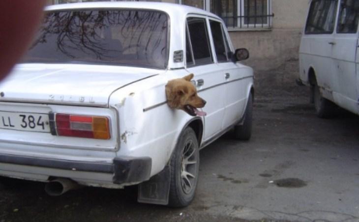 fotos graciosas de perros