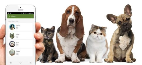aplicación móvil para perros