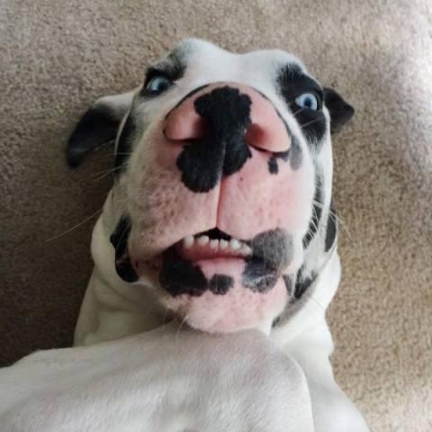 8 cosas que perros predicen