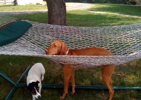 perros traviesos