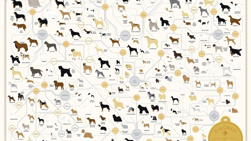 origen razas de perros